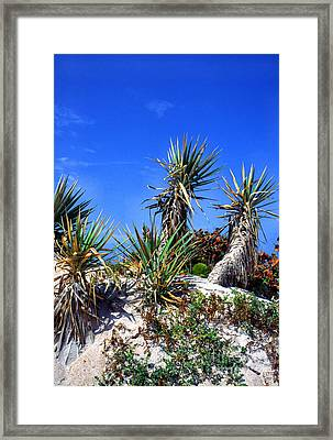 Saw Palmetto Canaveral National Seashore Framed Print by Thomas R Fletcher