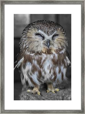 Saw Whet Owl Framed Print