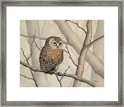 Sawhet Owl Woods Watcher Framed Print by Renee Forth-Fukumoto