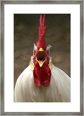 Say Ahh Framed Print