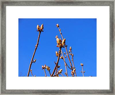 Say Bud  Framed Print