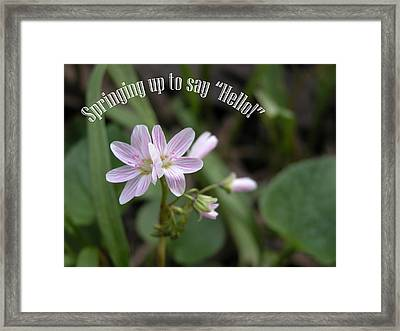 Say Hello Framed Print by Michelle Hastings