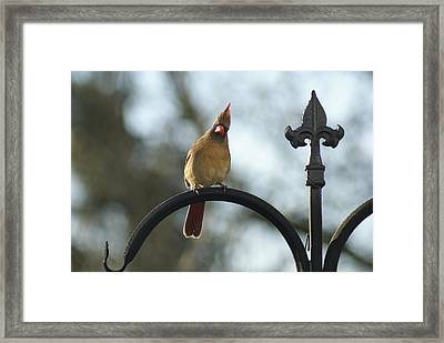 Say What Framed Print by Heidi Poulin