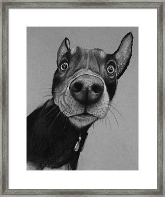 Say What?  Framed Print