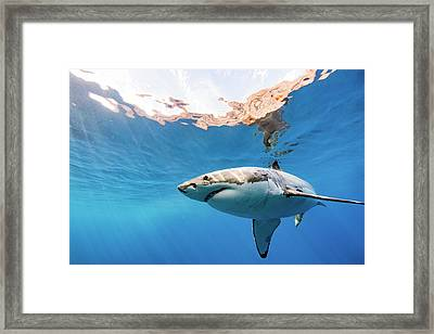 Saying Hello Framed Print by Shane Linke