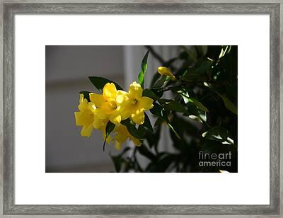 Sc Yellow Jessamine State Flower -georgia Framed Print by Adrian DeLeon