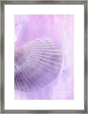 Scallop Sea Shell In Purple Framed Print by Betty LaRue