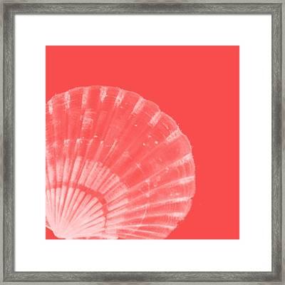 Scallop Shell Framed Print by Bonnie Bruno