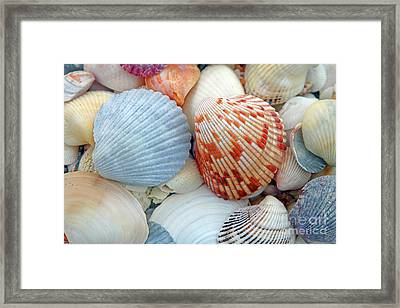Scallop Shells Framed Print
