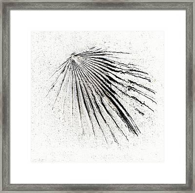 Scalloped Framed Print