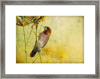 Scaly-breasted Munia Framed Print by Perry Van Munster