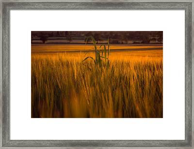 Scanning The Horizon Framed Print by Chris Fletcher