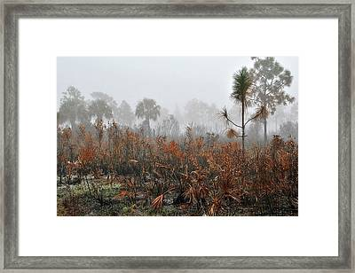 Scapes 2 13b Framed Print