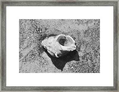 Scarborough Shell One Framed Print