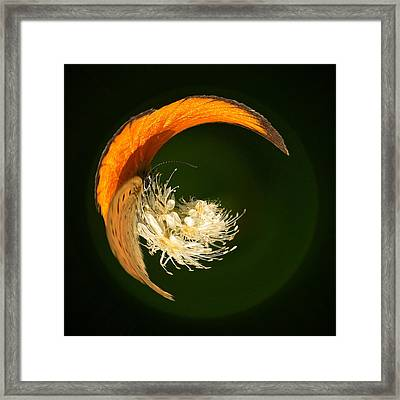 Framed Print featuring the photograph Scarce Copper 4 by Jouko Lehto