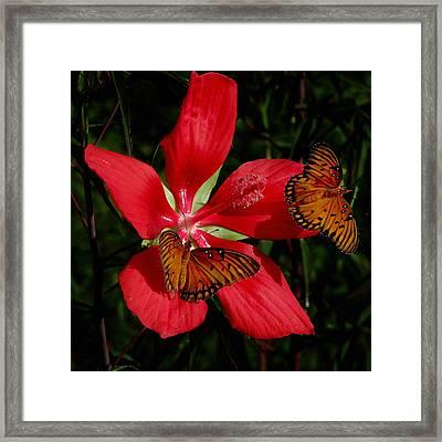 Scarlet Beauty Framed Print