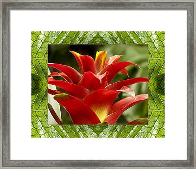 Framed Print featuring the photograph Scarlet Cheer by Bell And Todd