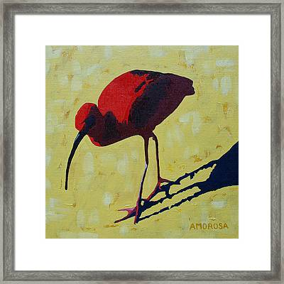 Scarlet Ibis Framed Print by Donald Amorosa