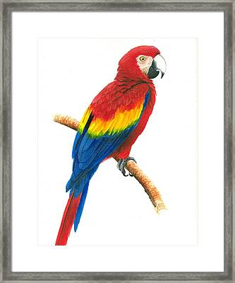 Scarlet Macaw Framed Print by Christopher Cox