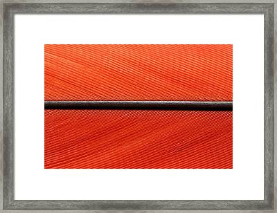Scarlet Macaw Feather Framed Print