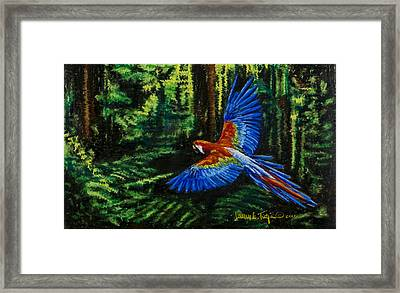Scarlet Macaw In The Forest Framed Print by Laurie Tietjen