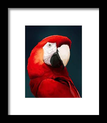 Macaw Framed Prints