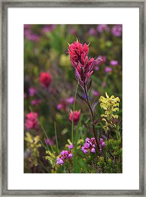 Framed Print featuring the photograph Scarlet Paintbrush by David Chandler