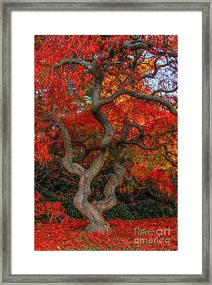 Scarlet Ramifications Framed Print