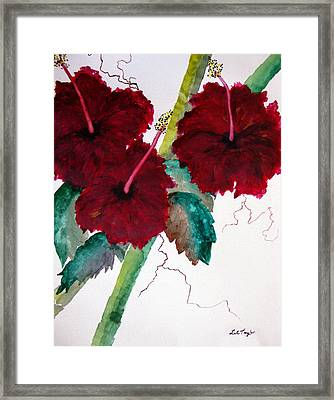Scarlet Red Framed Print by Lil Taylor