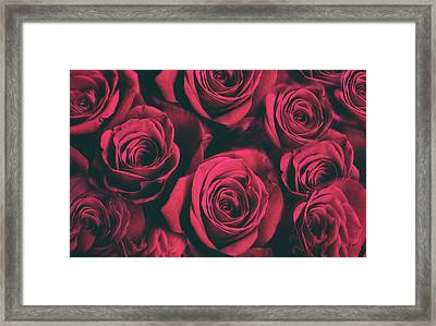 Framed Print featuring the photograph Scarlet Roses by Jessica Jenney