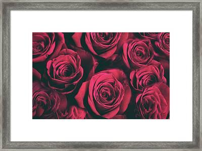 Scarlet Roses Framed Print by Jessica Jenney