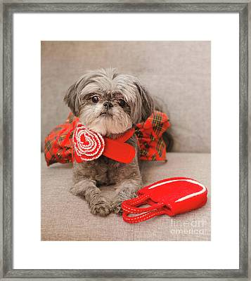 Scarlett And Red Purse Framed Print