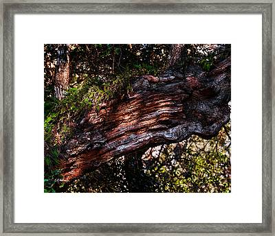 Scarred Framed Print by Christopher Holmes