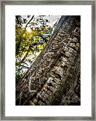 Scarred Tree And Boathouse Framed Print