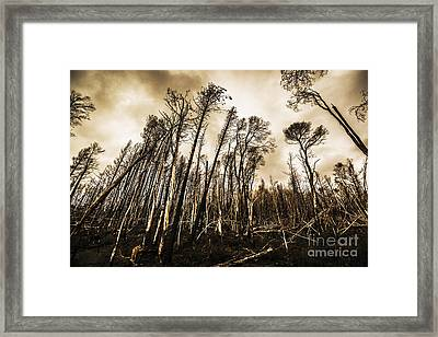 Scary Charcoal Forest  Framed Print