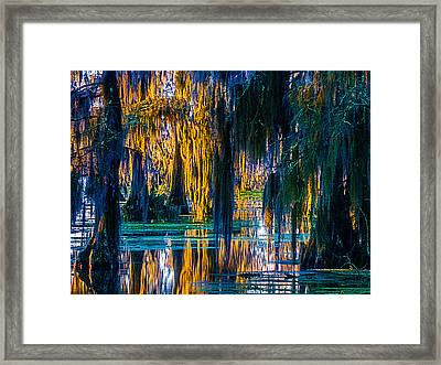 Scary Swamp In The Daytime Framed Print by Kimo Fernandez