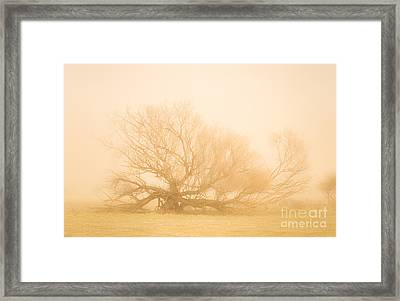 Scary Tree Scenes Framed Print