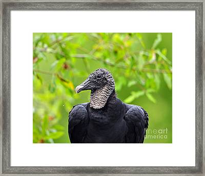 Framed Print featuring the photograph Scavenger Spittle by Al Powell Photography USA