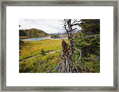 Scenic Alpine Lake And Meadow Framed Print by George Oze