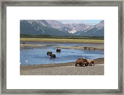 Scenic Bears Framed Print by David Wilkinson