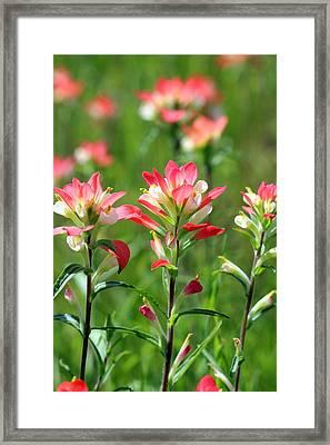 Scenic Paints Framed Print
