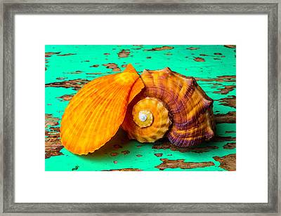 Schallop Seashell And Snail Shell Framed Print by Garry Gay