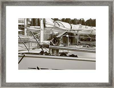 Schanuzer Dog On A Yacht - Monochrome Framed Print by Ulrich Kunst And Bettina Scheidulin