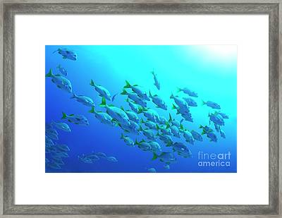 School Of Burrito Grunt Framed Print by Sami Sarkis