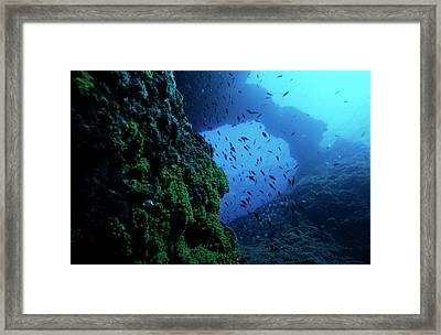 School Of Fish Swimming Through A Natural Rock Arch In The Ocean Framed Print by Sami Sarkis