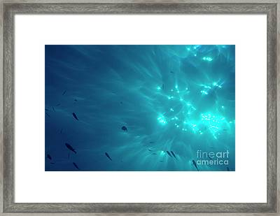 School Of Fishes Against Surface And Sunbeams Penetrating The Water Framed Print by Sami Sarkis