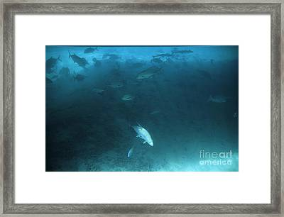 School Of Fishes Swimming Under The Shadows Of A Pontoon Framed Print by Sami Sarkis