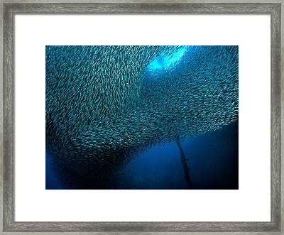 School Of Sardines At Panagsama Beach Framed Print by Henry Jager