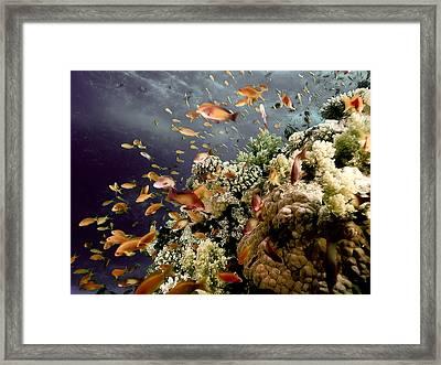 School Of Tropical Fish Fantasy Swirls Muted Earth Tones Framed Print
