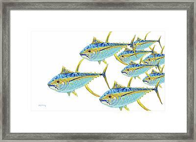 School Of Yellowfin Tuna  Framed Print by Ken Figurski